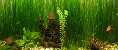 Castle in the aquarium Royalty Free Stock Images