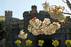Castle in bloom Royalty Free Stock Photos