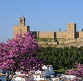 Castle Fortress, Antequera, Andalusia Spain. Castle fortress with pink blossom and townhouses in the foreground, Antequera, Malaga Province, Andalusia, Spain Royalty Free Stock Photography