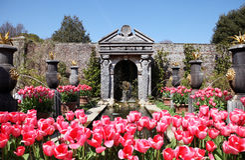Castle garden Arundel tulips royalty free stock photo