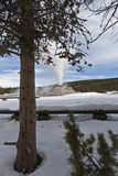 Castle Geyser, Yellowstone NP Stock Images