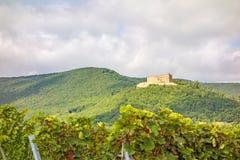 Castle Hambacher Schloss, άποψη από τον αμπελώνα Στοκ φωτογραφία με δικαίωμα ελεύθερης χρήσης