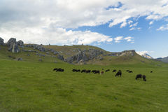 Castle Hill. New Zealand Royalty Free Stock Images