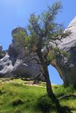 Castle Hill, New Zealand: Scattered Limestone boulders on a meadow and and isolated crooked bare tree contrasting stock image