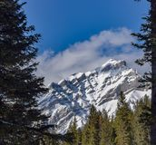 Castle Mountain Framed by the Forest royalty free stock photo