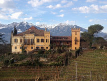 Castle. Old castle with vineyards tree and mountain on the background Stock Photos