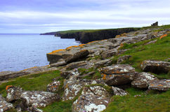 Castle of Old Wick, Caithness, Scotland, UK. The Castle of Old Wick is on the coast about one kilometre south of Wick, Caithness, Scotland. This ruin is the best Royalty Free Stock Photos