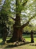 Castle park. Caste park statues trees Stock Photography
