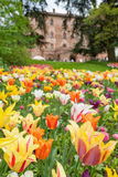 Castle of Pralormo, garden tulips in Piedmont, Italy Stock Images