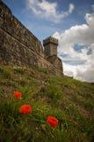 Castle of Radicofani with poppies. Stock Image