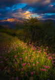 Castle Rock Clover Flowers Sequoia National Park Sunset Vertical Royalty Free Stock Images