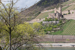 castle ruin ehrenfels bingen germany Royalty Free Stock Image