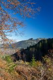 Castle ruin Falkenstein. View out of the autumn forest onto the castle ruin Falkenstein in Allgäu, Bavaria, Germany Royalty Free Stock Images
