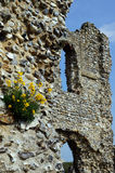 Castle Ruins in Bloom. Flowers growing on a ruined wall Stock Images