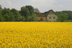 Castle Scheventorf with rape field in Germany Royalty Free Stock Photos