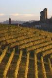 Castle of Serralunga d'Alba in the Langhe. Vineyard landscape with Serralunga d'Alba in the Langhe in Piedmont Stock Image