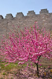 The castle in the spring Royalty Free Stock Images