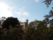 Castle. Royalty Free Stock Photo