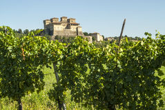 Castle of Torrechiara and vineyard Royalty Free Stock Image