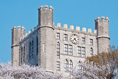Castle tower with clock over blooming cherry trees. In a sunny spring day (Kyung-Hee University building, Seoul, Korea Stock Photos