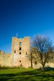 Castle tower,walls and tree. Ludlow castle Royalty Free Stock Photography