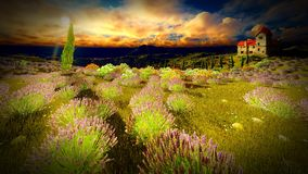 Castle towering 9ver lavender fields. Lavender fields landscape in the evening Royalty Free Stock Photo
