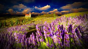 Castle towering 9ver lavender fields. Lavender fields landscape in the evening Royalty Free Stock Photos