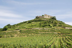 Castle on a vineyard Royalty Free Stock Image