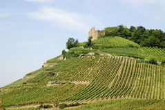 Castle on a vineyard Stock Image