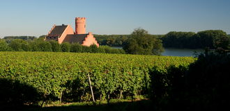 Castle in a vineyard Royalty Free Stock Images
