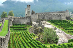 Castle and vineyards. Old castle with vineyards and mist covered mountains stock images