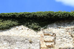 Castle wall overgrown by green plants Stock Photo