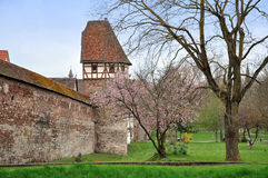 Castle in Weil der Stadt. Castle in Weil der Stadt, Baden-Wurttemberg, Germany. Stone wall and half-timbered tower with tiled roof. Green grass and blooming Stock Photos