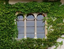 Castle window with ivy in Slovenia Royalty Free Stock Photos
