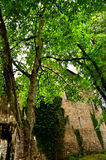 Castle Zvikov Royalty Free Stock Photo