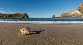 Castlepoint Seashell Beach Stock Images