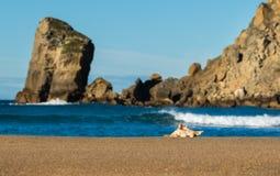Castlepoint Seashell Beach Waves Stock Photo
