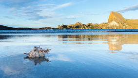 Castlepoint Seashell Royalty Free Stock Photography