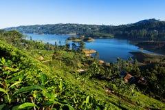 Castlereigh reservoir in sri lanka. Castlereigh reservoir and surrounded tea plantations in sri lanka Royalty Free Stock Images