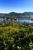 Castlereigh reservoir in sri lanka. Castlereigh reservoir and surrounded tea plantations in sri lanka Stock Photos