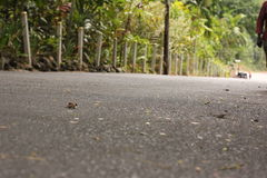 Castleton Road Surface. Taken at a Tennis court in rural Jamaica showcasing vines Stock Images