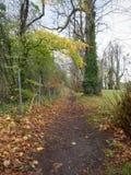 Castletown庄园, Celbridge,基尔代尔,爱尔兰 库存图片