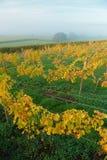 Castlewood vingård royaltyfri fotografi