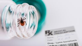 Castor bean tick, medical prescription and laboratory tube. Ixodes ricinus stock photos