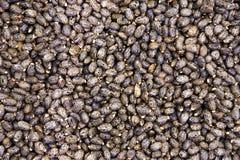 Castor beans Stock Image