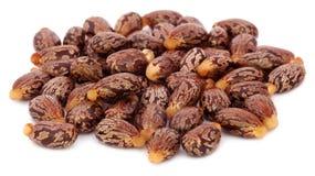 Castor beans. Over white background stock image
