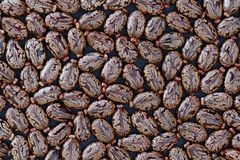 Castor Beans Ricinus communis - closeup view. Closeup of castor beans ricinus communis on dark background, usable as background image royalty free stock photo