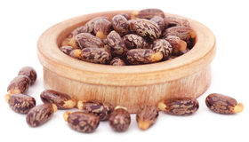 Castor beans. In a wooden bowl over white background royalty free stock images