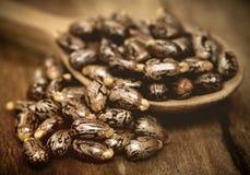 Castor beans. In a wooden spoon stock photos