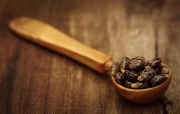 Castor beans Royalty Free Stock Image